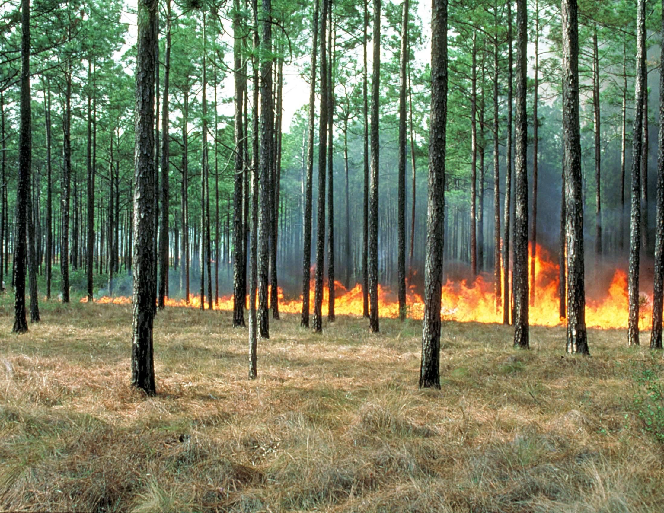 Photograph of a prescribed burn in South Georgia.