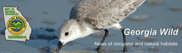 Georgia DNR Wildlife Resources Division e-news masthead; photograph of sanderling