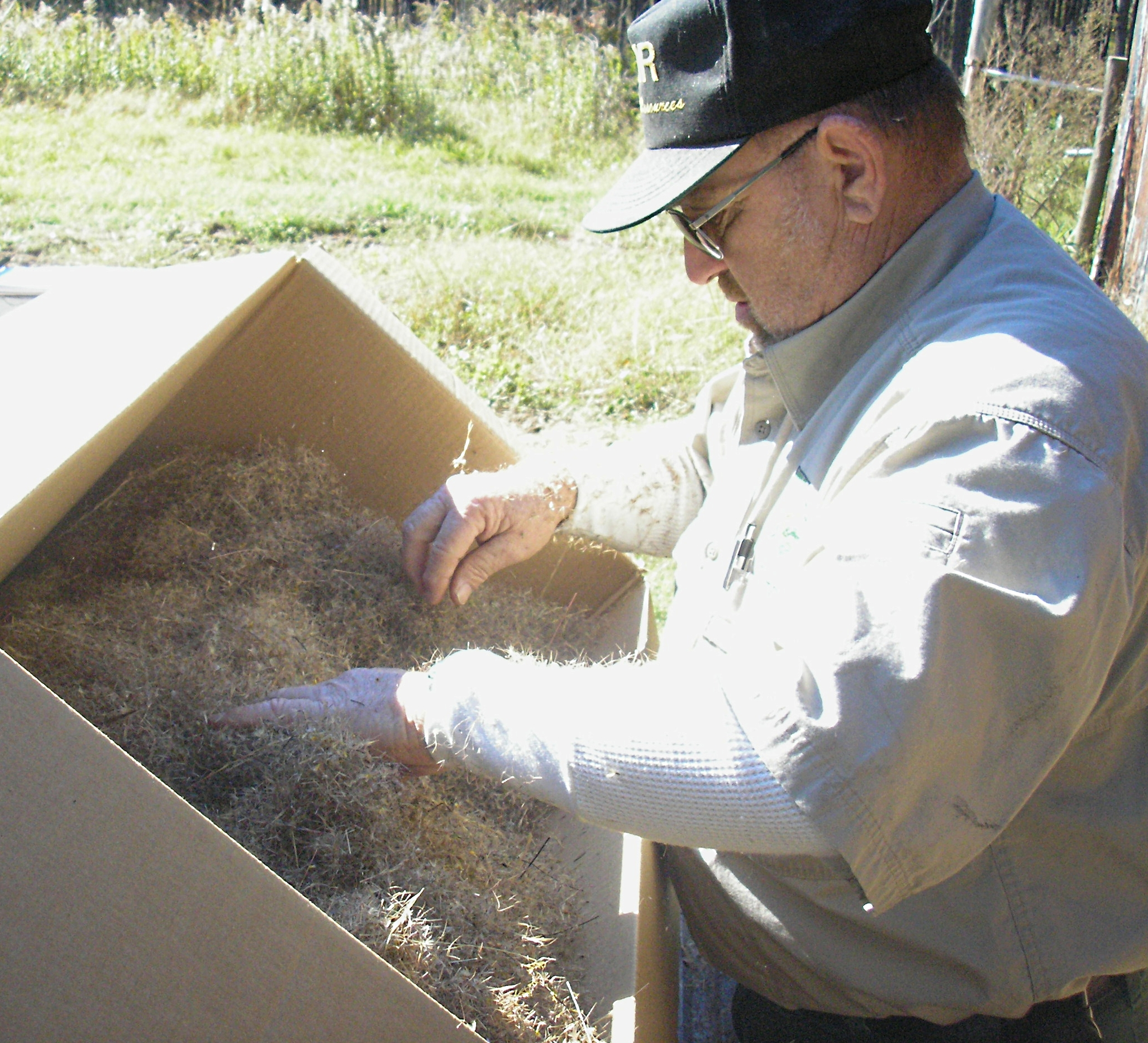 Photo of Danny Smith cleaning needles from wiregrass seed.