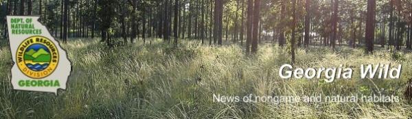 December Ga. DNR e-news; image of wiregrass
