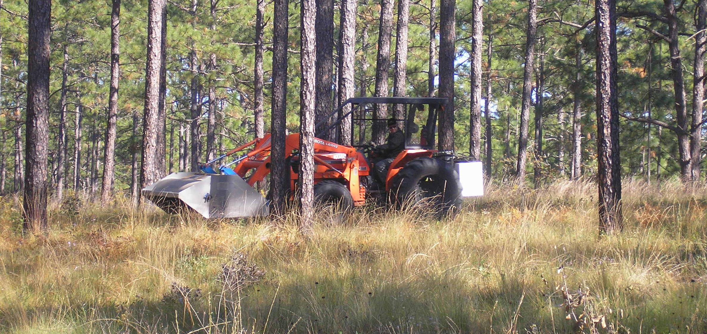 Photo of harvesting wiregrass seed on Doerun Natural Area.