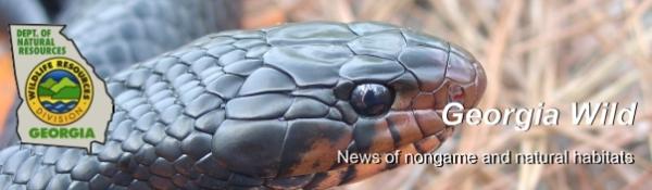 DNR e-news; indigo snake photo