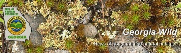 Georgia DNR e-news; photo of outcrop plants
